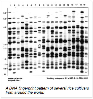 DNA fingerprint pattern