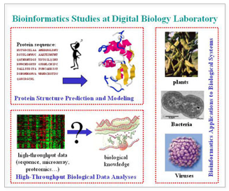 bioinformatics studies at digital biology laboratory
