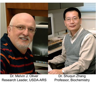 Two members of the Interdisciplinary Plant Group have been elected Fellows of the American Association for the Advancement of Science (AAAS). <br><br><a href=http://ipg.missouri.edu/feature-stories/TwoIPGme_120312.cfm>READ MORE>></a>